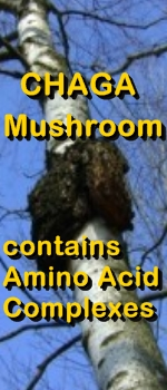 Ormus Minerals - CHAGA MUSHROOMS have amino acids